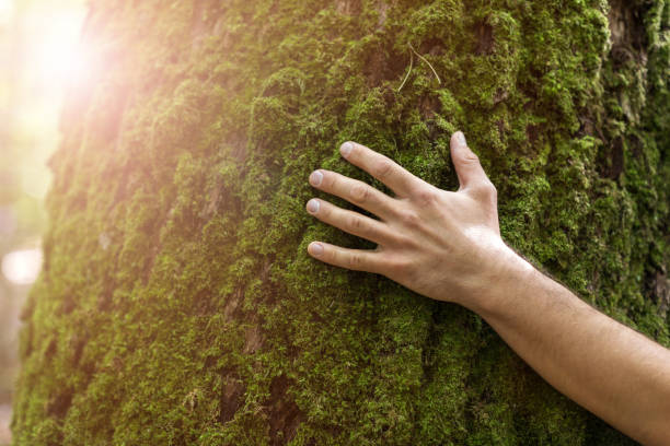 Man hugging tree in forest Man hugging tree in forest tree hugging stock pictures, royalty-free photos & images