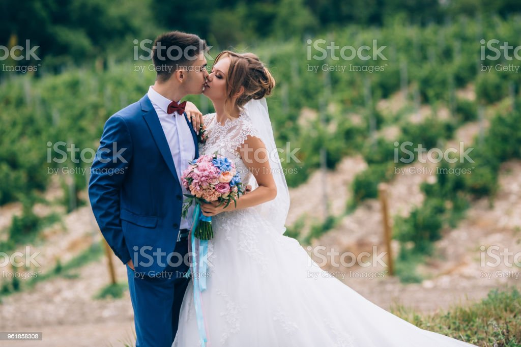 A man in a suit and a girl in a brown wedding dress are kissing against a background of vineyards. In her hand, the girl has a beautiful bouquet of real flowers royalty-free stock photo