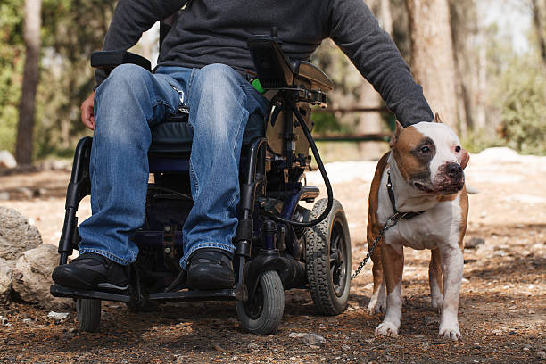 Man in a wheelchair with his faithful dog. Young man in a wheelchair with his faithful dog walk in the park paraplegic stock pictures, royalty-free photos & images