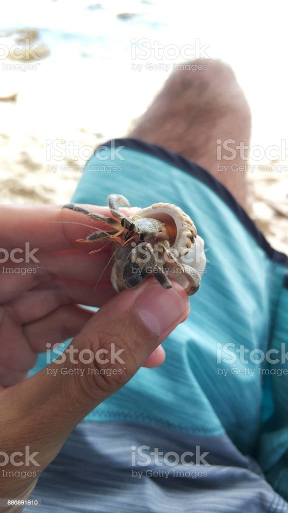 Man in blue boardshorts holding a hermit crab in his hand stock photo