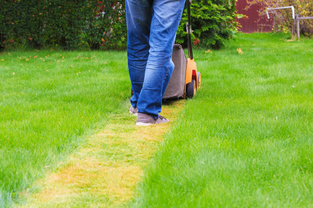 Man in blue jeans mows the grass with a lawn mower. Back view stock photo
