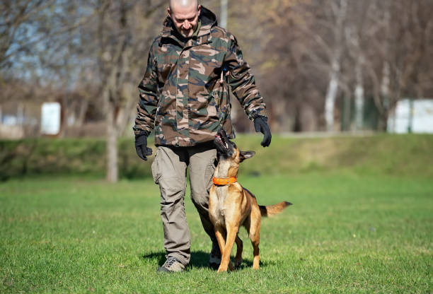Man in camouflage colored jacket is training a belgian shepherd puppy picture id1150131674?b=1&k=6&m=1150131674&s=612x612&w=0&h=5 j8roee v1s2j kzii16hdd3zfxe32gpcs3htrk0kq=