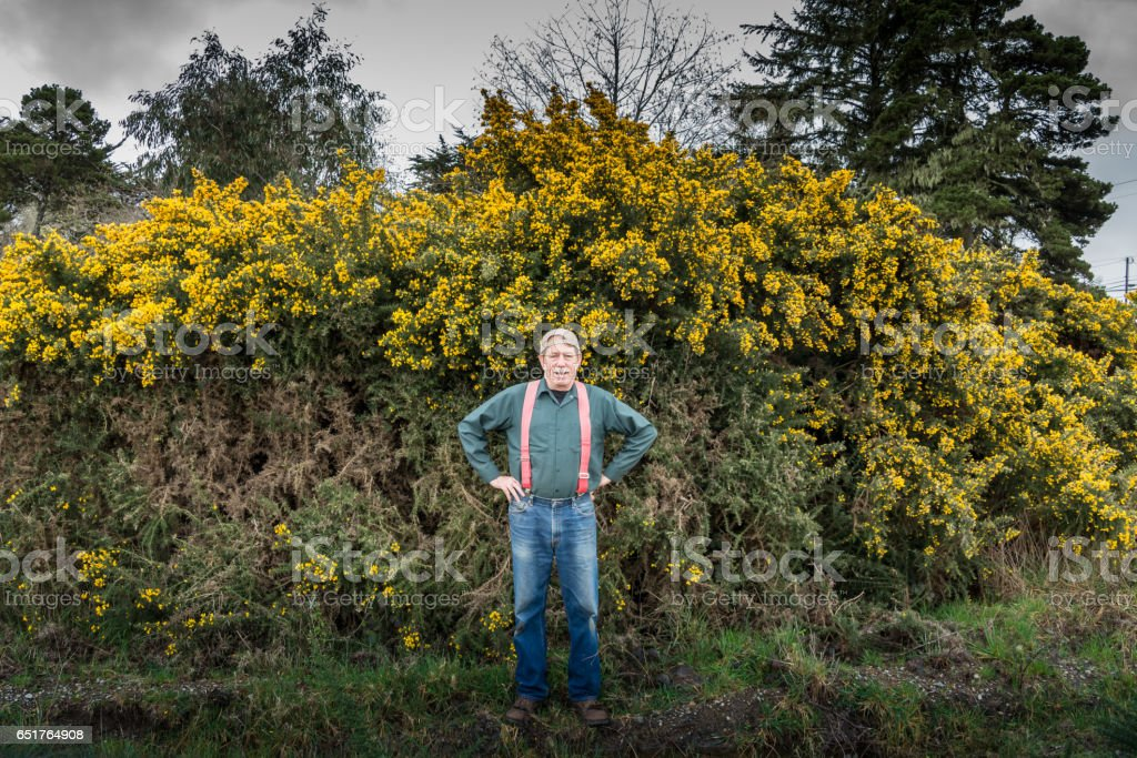 Man in front of gorse plant stock photo