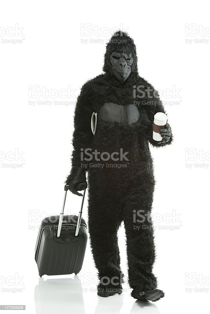Man in gorilla costume with a suitcase and coffee royalty-free stock photo