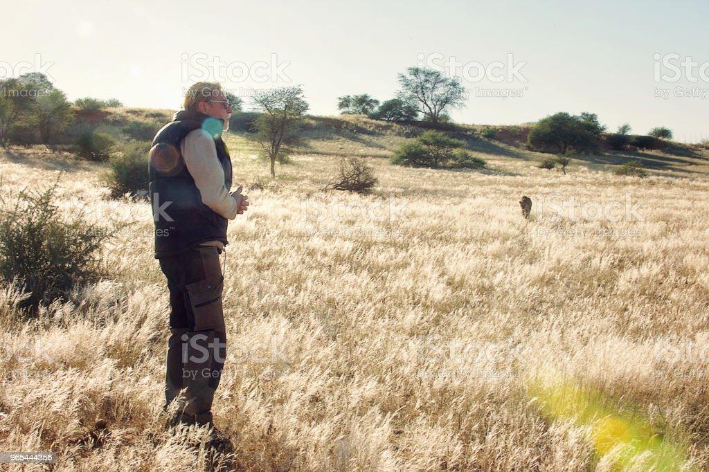 접근 하는 치타와 잔디에 남자 - 로열티 프리 가까이 옴 스톡 사진