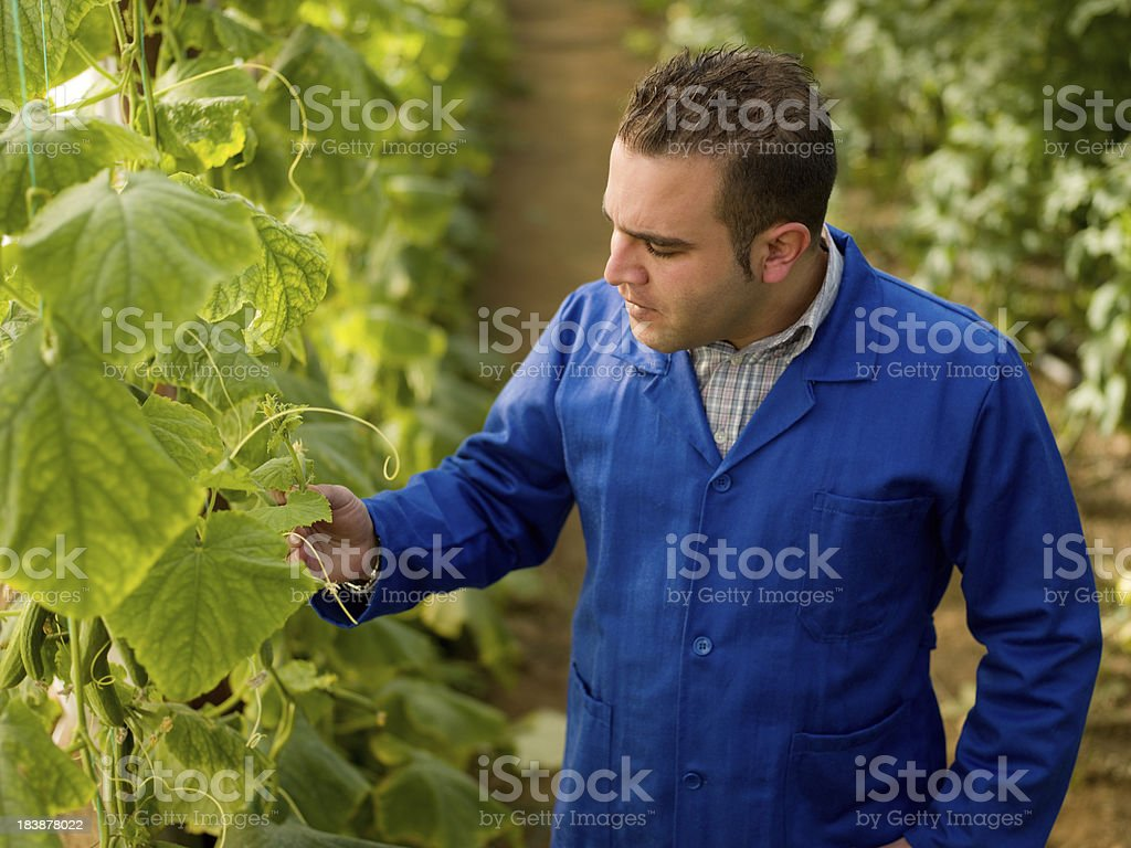 Man in greenhouse checking plants stock photo