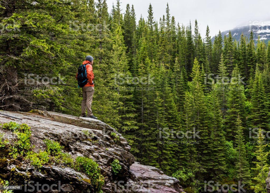 Man in Orange Coat Looks out over Pine Forest stock photo