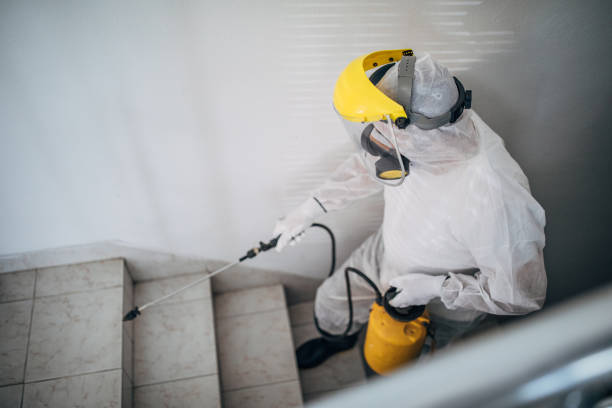 Man in protective suit disinfecting steps in building stock photo