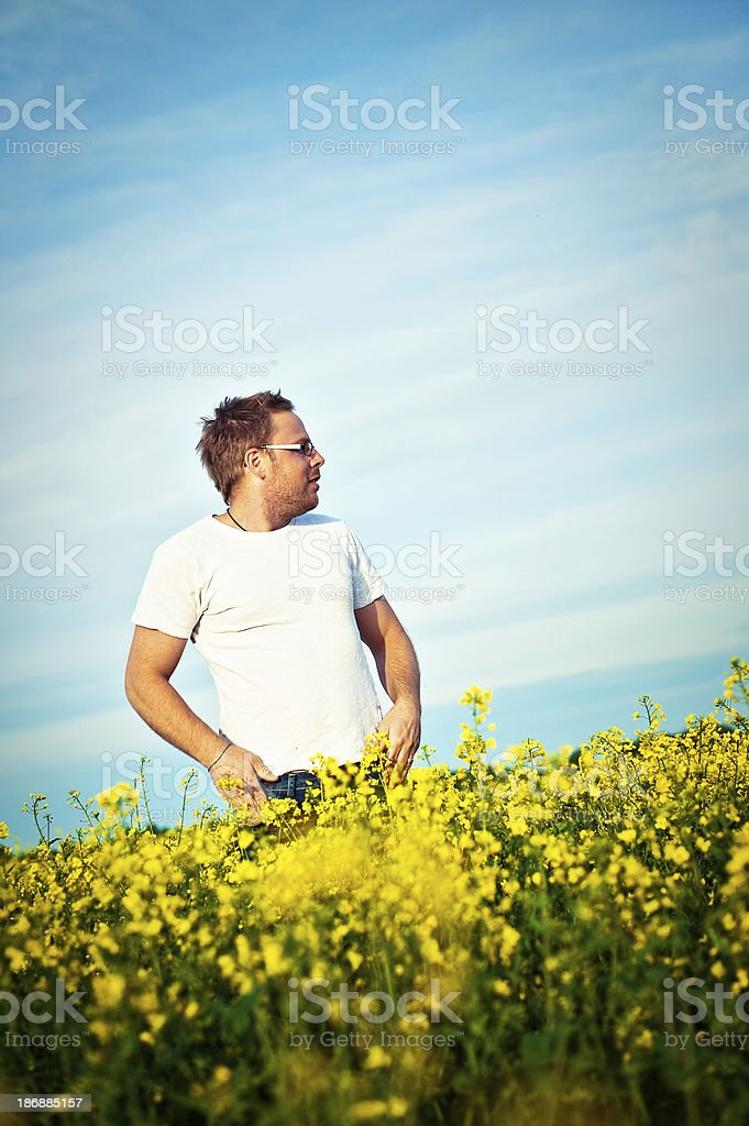 Man in rapeseed field stock photo