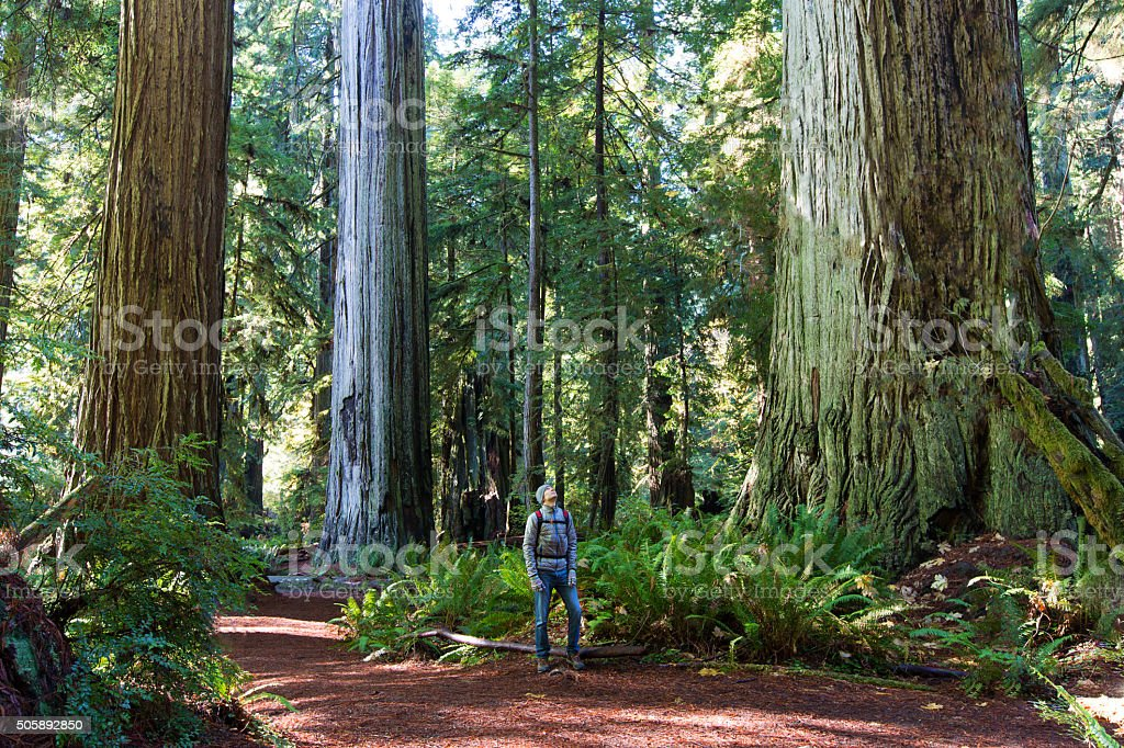 man in redwood forest stock photo