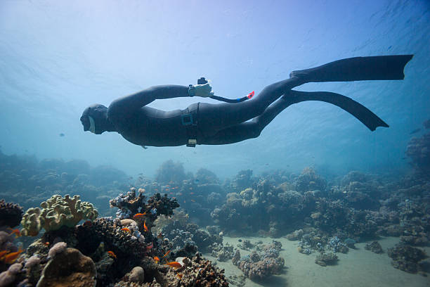 Man in scuba diving gear swimming near coral in the ocean stock photo