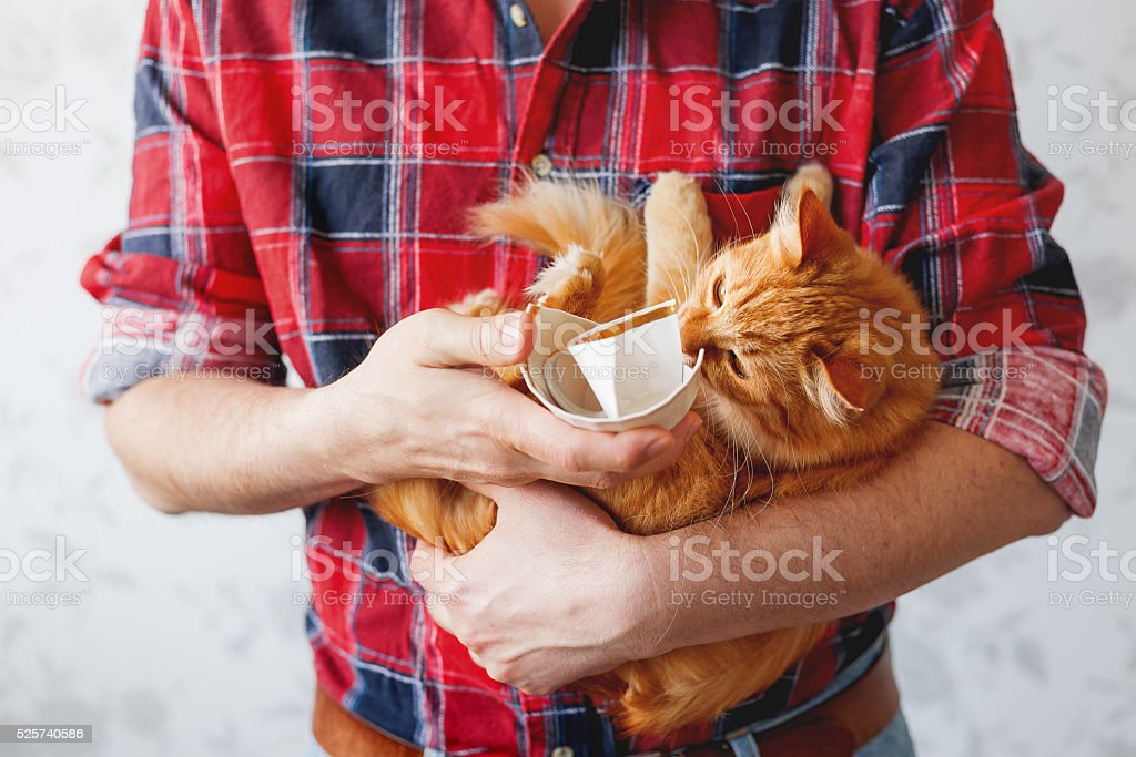 Man in tartan shirt holds broken cup and ginger cat. stock photo
