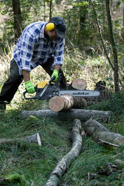 man in the forest cutting trees with chainsaw stock photo