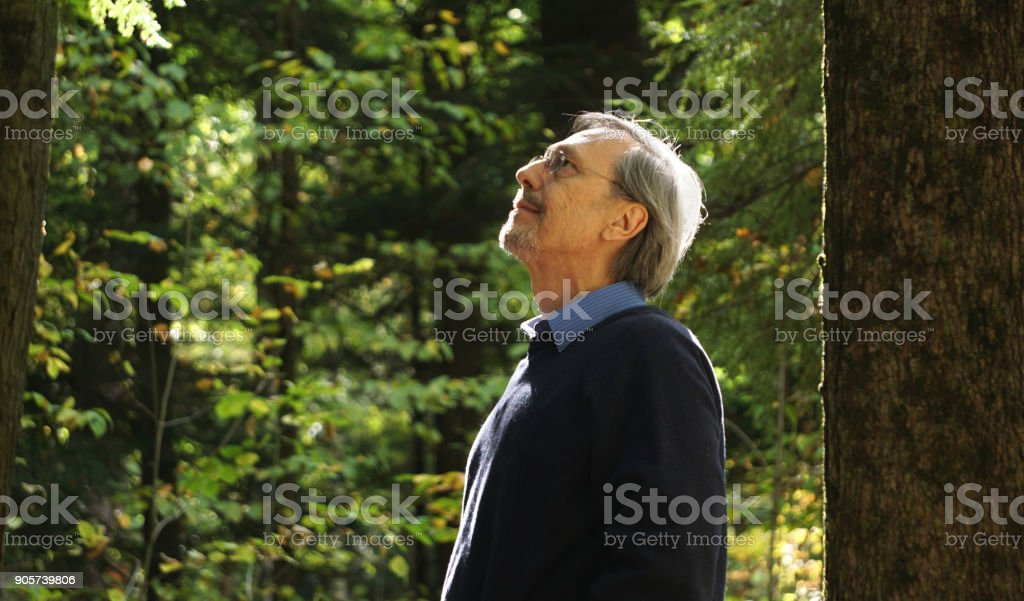 Man in the woods stock photo