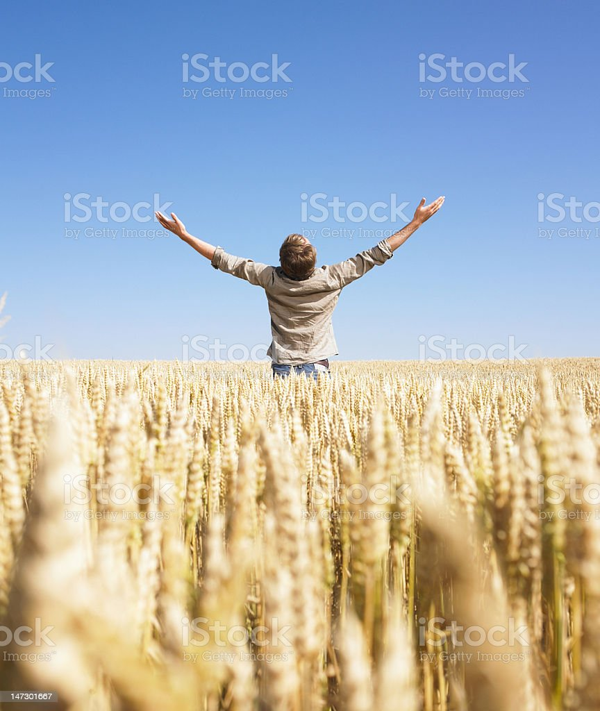 Man in Wheat Field with Arms Outstretched stock photo