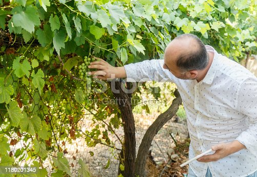 Man in wineyard