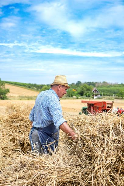 man in  wintage clothes on the field in harwest time stock photo