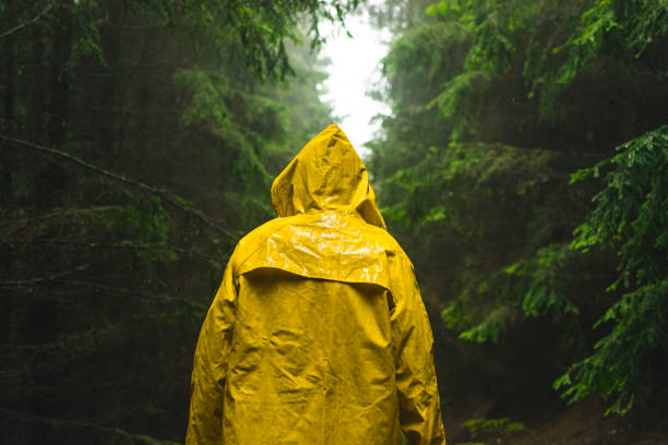 Man in yellow raincoat walking in the coniferous forest during rainy and foggy day. Man in yellow raincoat walking in the coniferous forest during rainy and foggy day. waterproof clothing stock pictures, royalty-free photos & images
