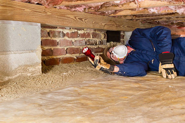 Man inspecting for termites in crawl space Termite inspector in residential crawl space inspects a sill for termites. termite stock pictures, royalty-free photos & images