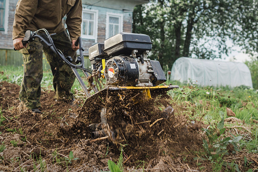 A man intensively plows his vegetable garden by motor cultivator