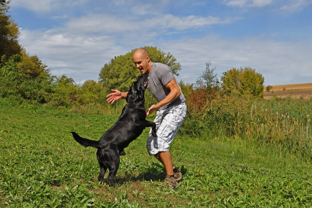 Man is playing with dog in the park at sunny day picture id855106826?b=1&k=6&m=855106826&s=612x612&w=0&h=6wcaw42q3wy3ul o0v4vjsu6upq3udjkwyyqxopiksu=