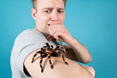 Asian species Tarantula spider Found in Thailand, the scientific name is \