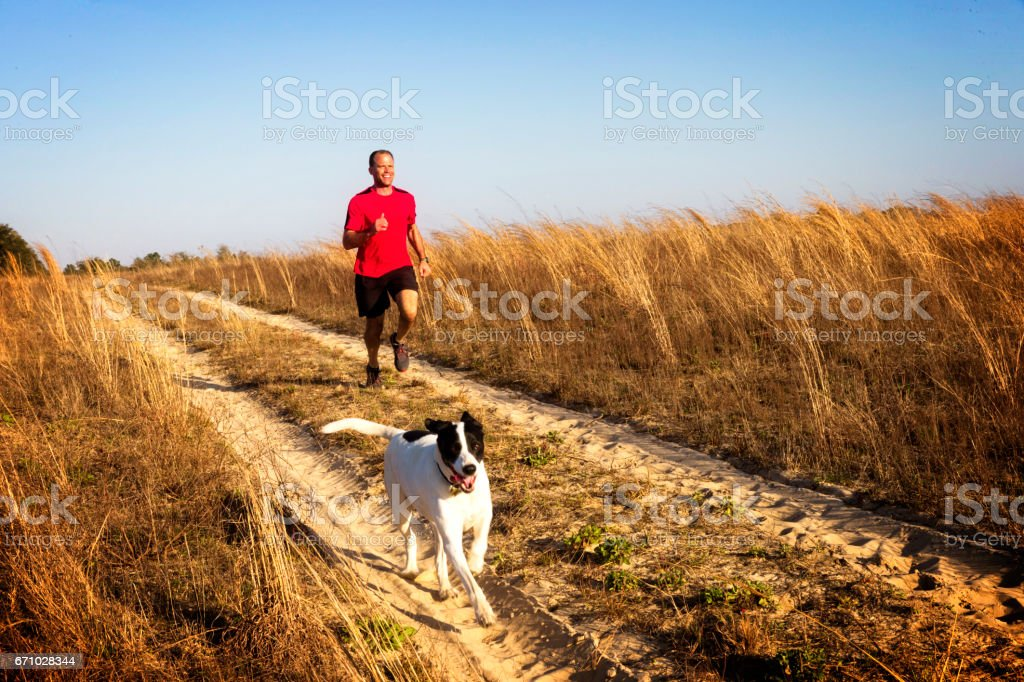 Man jogging with dog. stock photo