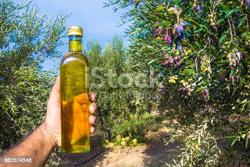 istock Man keeps a bottle of extra virgin olive oil in an olive tree field at Crete, Greece. 882574548