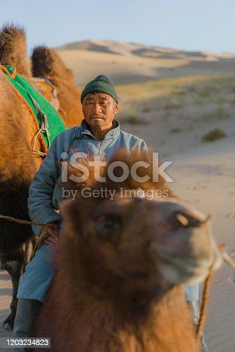 Mongolian man leading caravan of Bactrian camel in the Gobi Desert at sunset