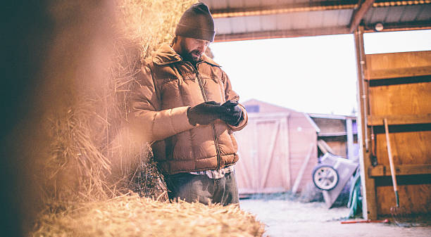Man leaning against hay in barn looks down at phone Working Man leaning against hay in barn looks down at phone rancher stock pictures, royalty-free photos & images