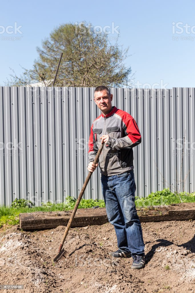 Man leveled seedbed rake in the garden stock photo