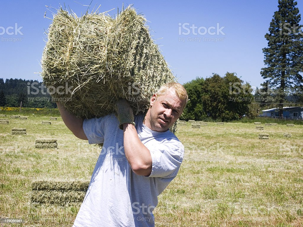 Man lifting hay bale stock photo