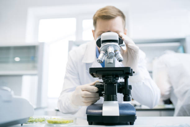 Man looking at microscope in laboratory Male scientist studying green vegetables under microscope standing at desk with white laboratory and microbiologist on blurred background microbiologist stock pictures, royalty-free photos & images