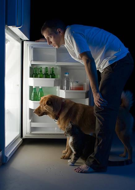 man schaut in den kühlschrank. - suche katze stock-fotos und bilder