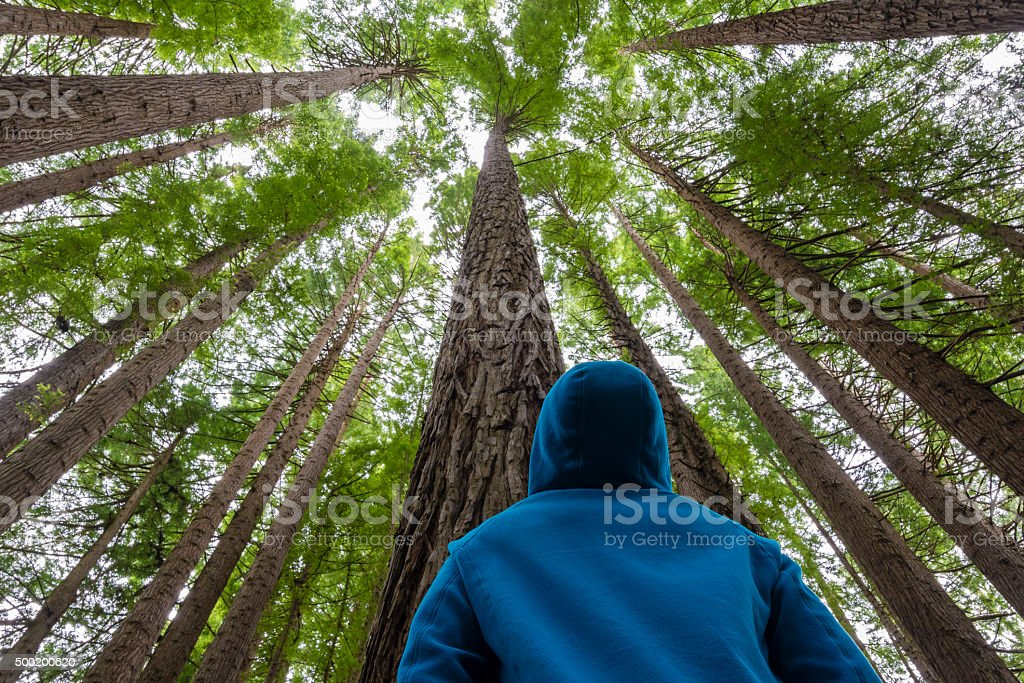 Man looking up in a forest stock photo