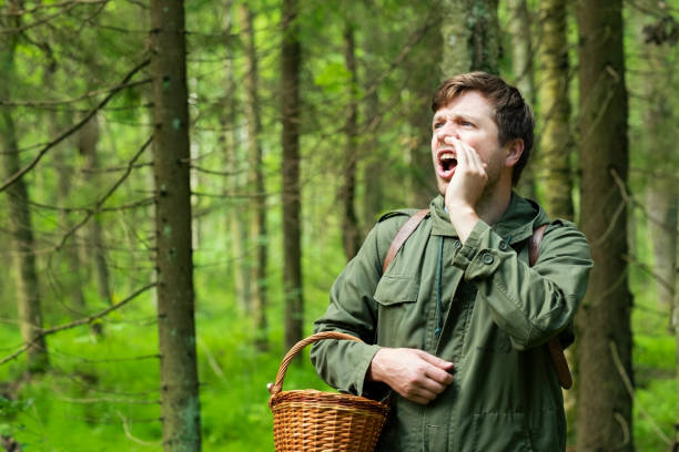 Man lost his wife in the forest during walking and picking mushrooms. stock photo