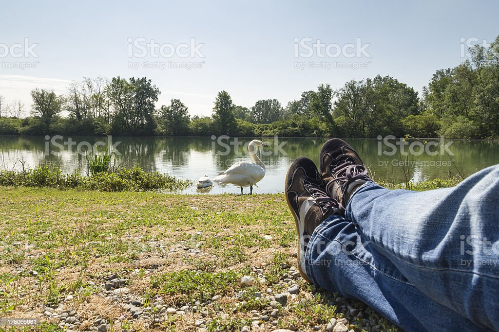 Man lying on grass watching swan stock photo