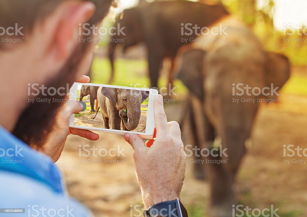 Man making photo with little elephant stock photo