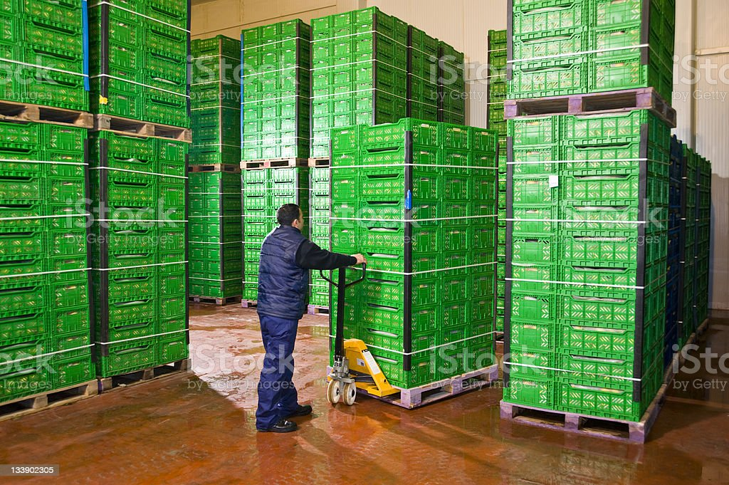 Man moving pallet of green fruit storage crates stock photo