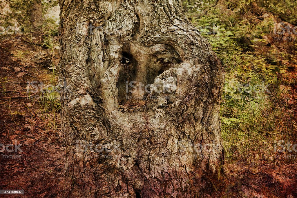Man of the Forest royalty-free stock photo