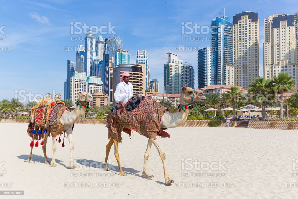 Man offering camel ride on Jumeirah beach, Dubai, United Arab Dubai, UAE - Janury 31, 2016: Tour guide offering tourist camel ride on Jumeirah beach on 31th of January in Dubai, United Arab Emirates. Luxury Dubai Marina skyscrapers in background. Adult Stock Photo