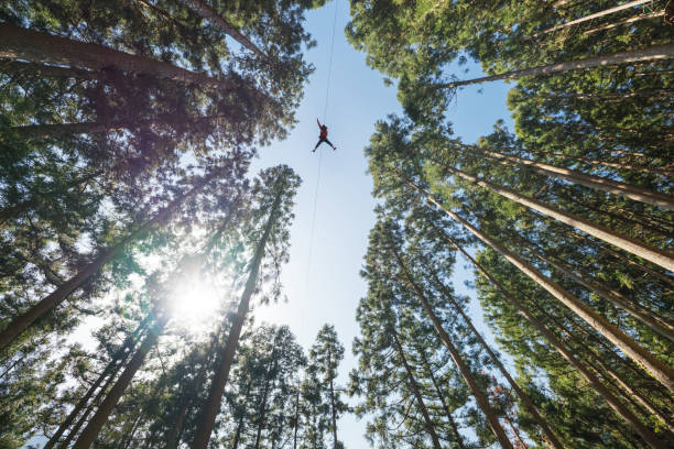 Man on a zip line flying through the forest canopy. Man on a zip line flying through the forest canopy. zip line stock pictures, royalty-free photos & images