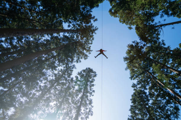 Man on a zip line flying through the forest canopy. stock photo