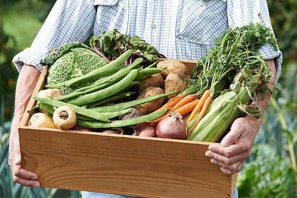 Man On Allotment With Box Of Home Grown Vegetables stock photo