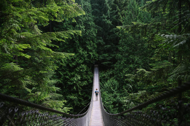 man on an adventure exploring a lake and walking a suspension bridge - canada travel stock photos and pictures