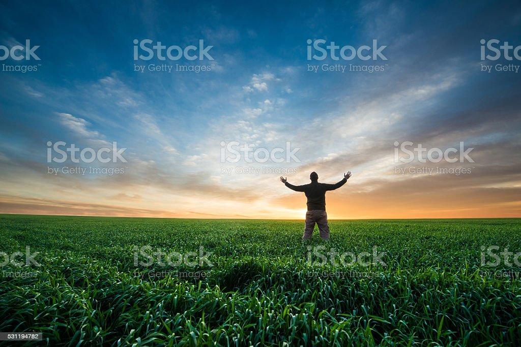 man on green field of wheat at sunrise stock photo