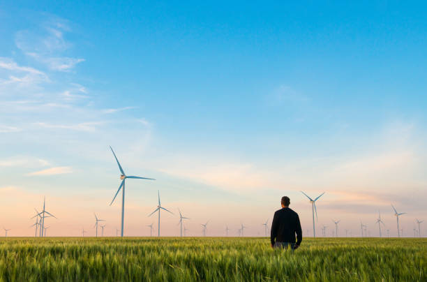 Man on green field of wheat with windmills for electric power production stock photo