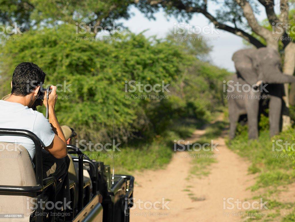 Man On Safari Taking Photograph Of Elephant stock photo