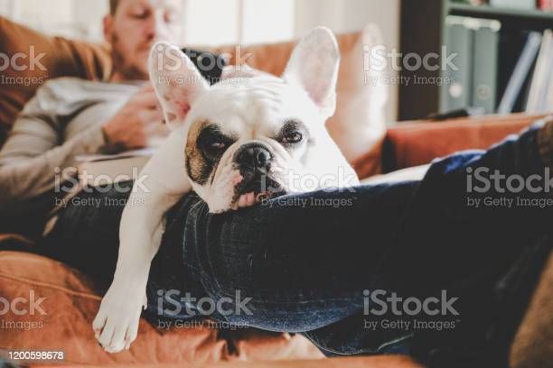 Man on sofa using phone with frenchie dog sleeping on his lap picture id1200598678?b=1&k=6&m=1200598678&s=612x612&h=3e8vj9uiairmqsp7itpmfgg ma14kvyrnpropombmo4=