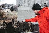 Man petting donkeys in Switzerland